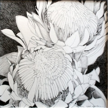 King Protea ink on paper