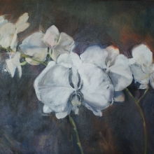 White Orchids - Oil on canvas 610mm x 760mm SOLD