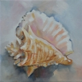 Shell series I - oil on canvas -200mm x 200mm SOLD