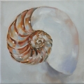 Shell Series II - Nautilis - oil on canvas - 200mm x 200mm