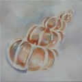 Shell series III - oil on canvas -200mm x 200mm