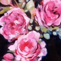 pink-roses-iii_oil-on-canvas_300mm-x-300mm_carolleebeckx-com_