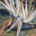 Strelitzia Squared - oil on canvas - 500mm x 500mm