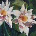 Waterlilies - oil on canvas - 500mm x 500mm Waterlilies - oil on canvas - 500mm x 500mm