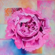 Damask Peony - oil on canvas 765mm x 765mm