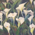 Arums III - Oil on canvas 600mm x 1000mm